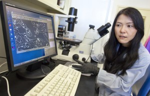 Saori Furuta in the research group of Mina Bissell found that normal breast cells, secrete the protein interleukin 25 to kill nearby breast cancer cells. (Photo by Roy Kaltschmidt, Berkeley Lab Public Affairs)