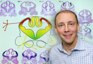 Axel Visel led the development of a gene enhancer atlas for the cerebrum that will provide new insight into how the brain develops and functions, and how it malfunctions in neurological disorders. (Photo by Roy Kaltschmidt)