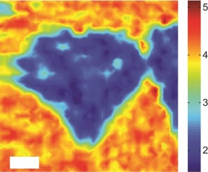 Photoluminescence mapping of a MoS2/WS2  heterostructure  with the color scale representing photoluminescence intensity shows strong quenching of the MoS2 photoluminescence. (Image courtesy of Feng Wang group)