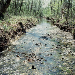 The Bear Creek watershed in Oak Ridge, TN, was a a crucial site for the early development of nuclear weapons under the Manhattan Project and harbors spectacular geochemical gradients.