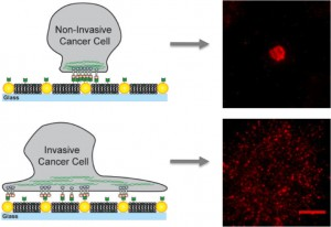 On artificial membranes embedded with gold nanodots, non-invasive cancer cells bind only to the nanodots and become immobilized while invasive cells bind to the membrane as well as the nanodots creating mobile clusters that contribute to metastasis.